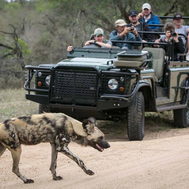 Complete Kruger Safari
