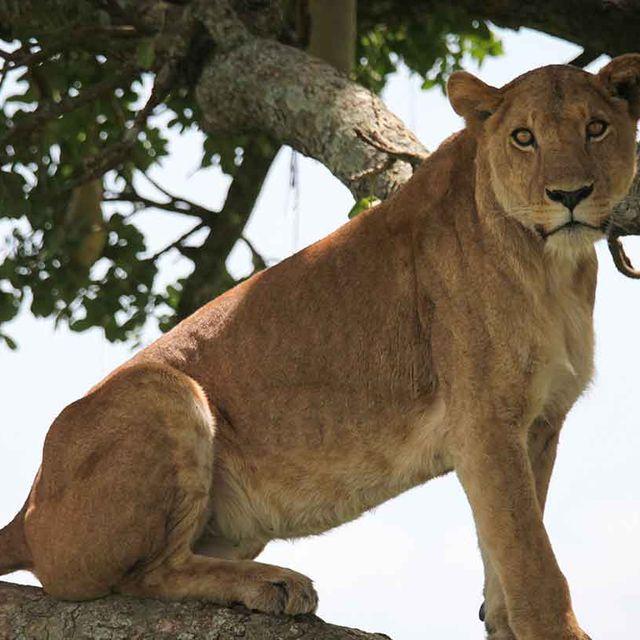 Murchison Falls and Kidepo Safari