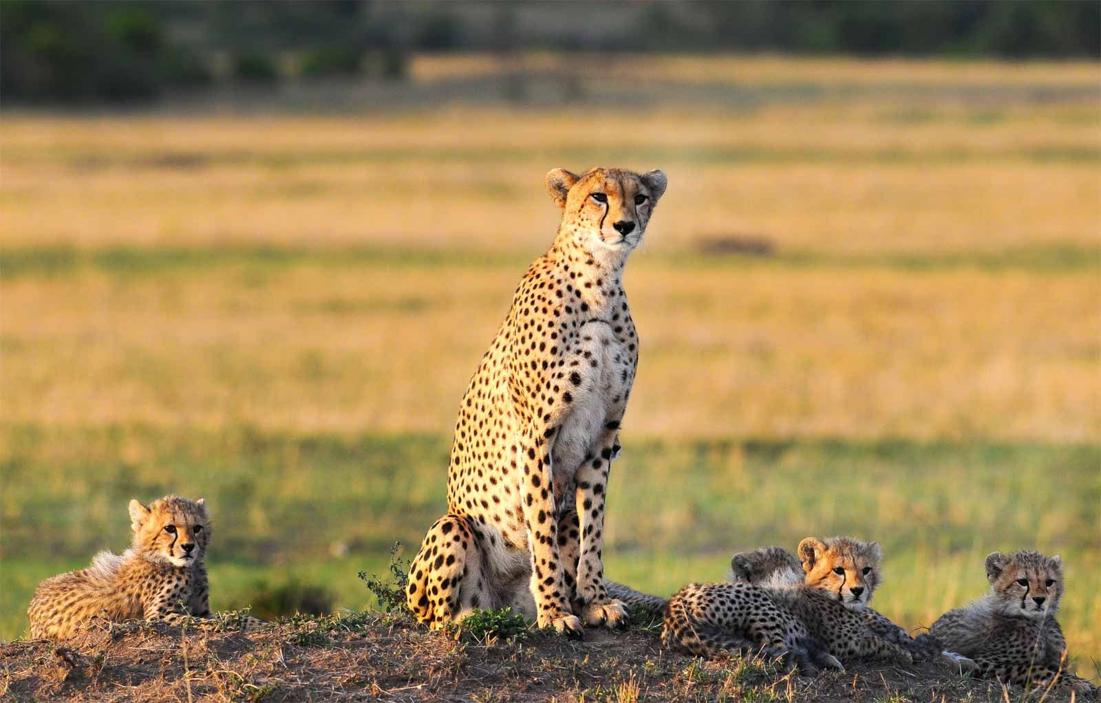 Kenya Escape Adventure Safari