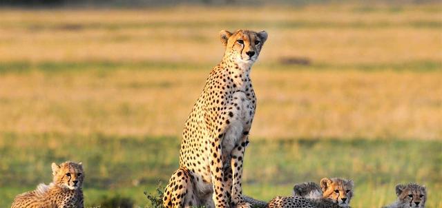 Kenya Escape Adventure