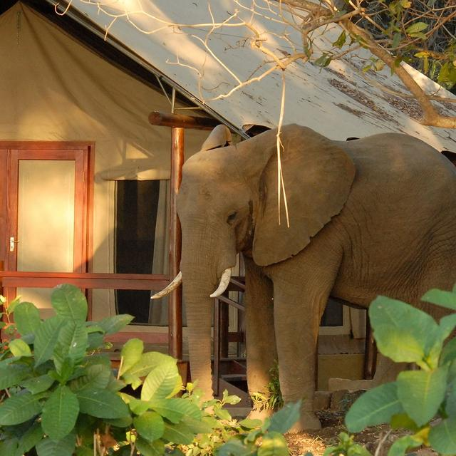Lugenda Mobile Safari