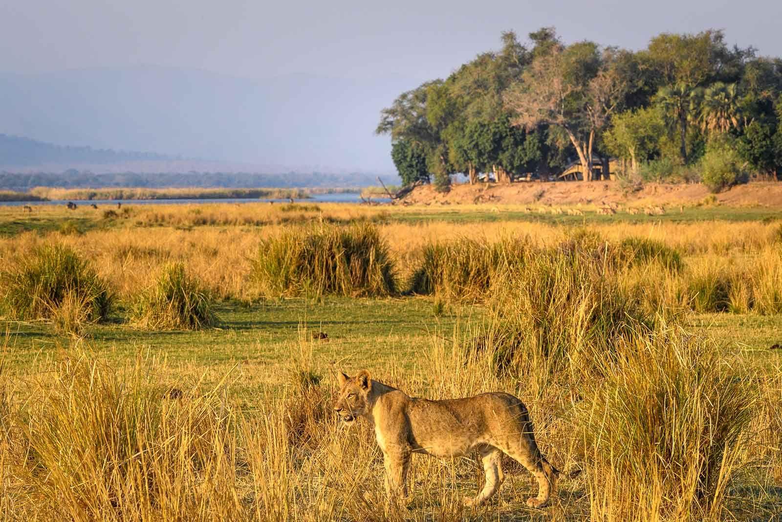 Unique Zimbabwe