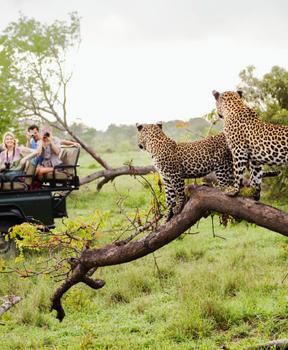Kruger Park - Southern Africa