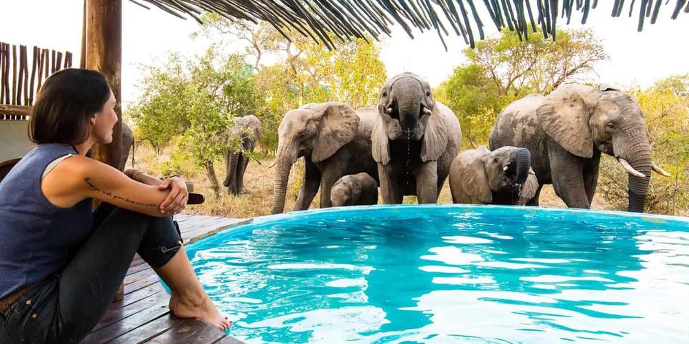 Sun Safaris Kruger National Park Safaris & Packages