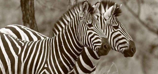 Zebra Hills Reserve