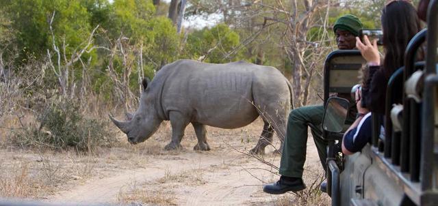 Chacma and nThambo Safari