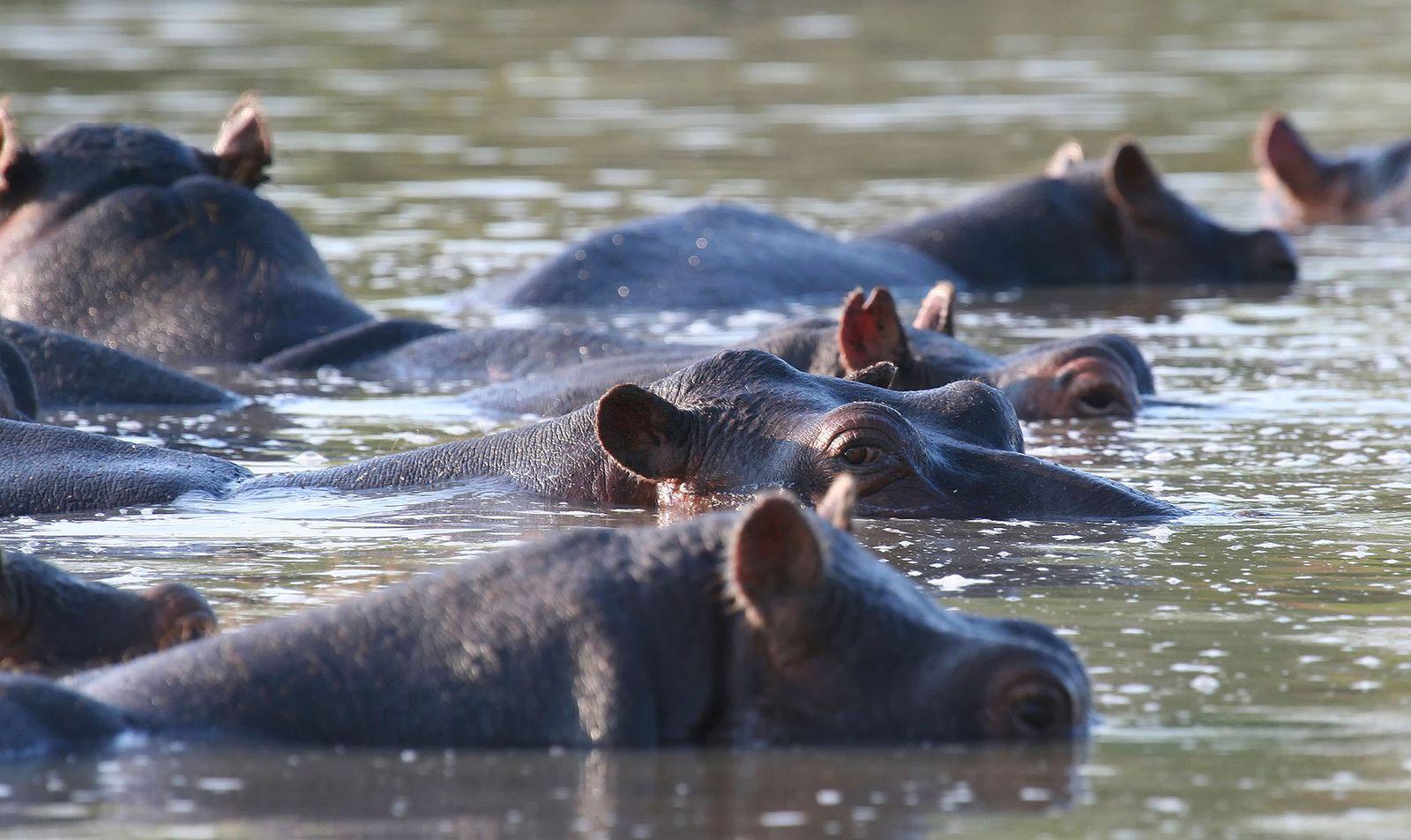 Zambezi Kulefu Camp