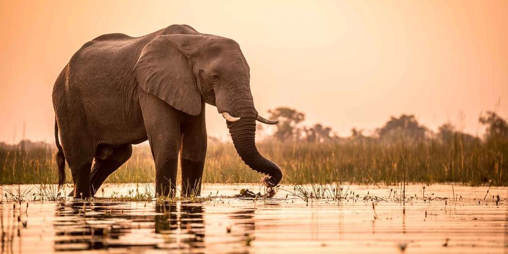 Okavango Delta Safari tour with Sun Safaris
