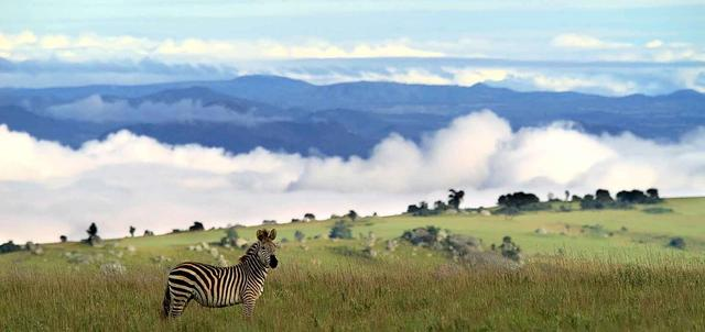 Nyika & Lake Malawi Fly-in