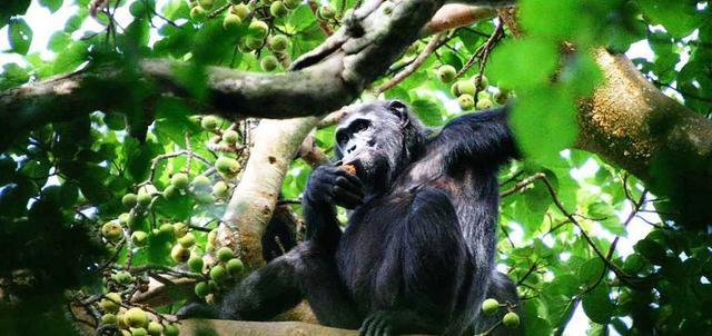 Trails of Uganda