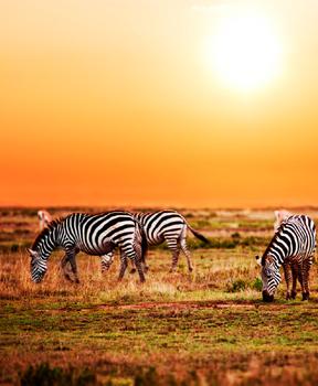 Serengeti - East Africa