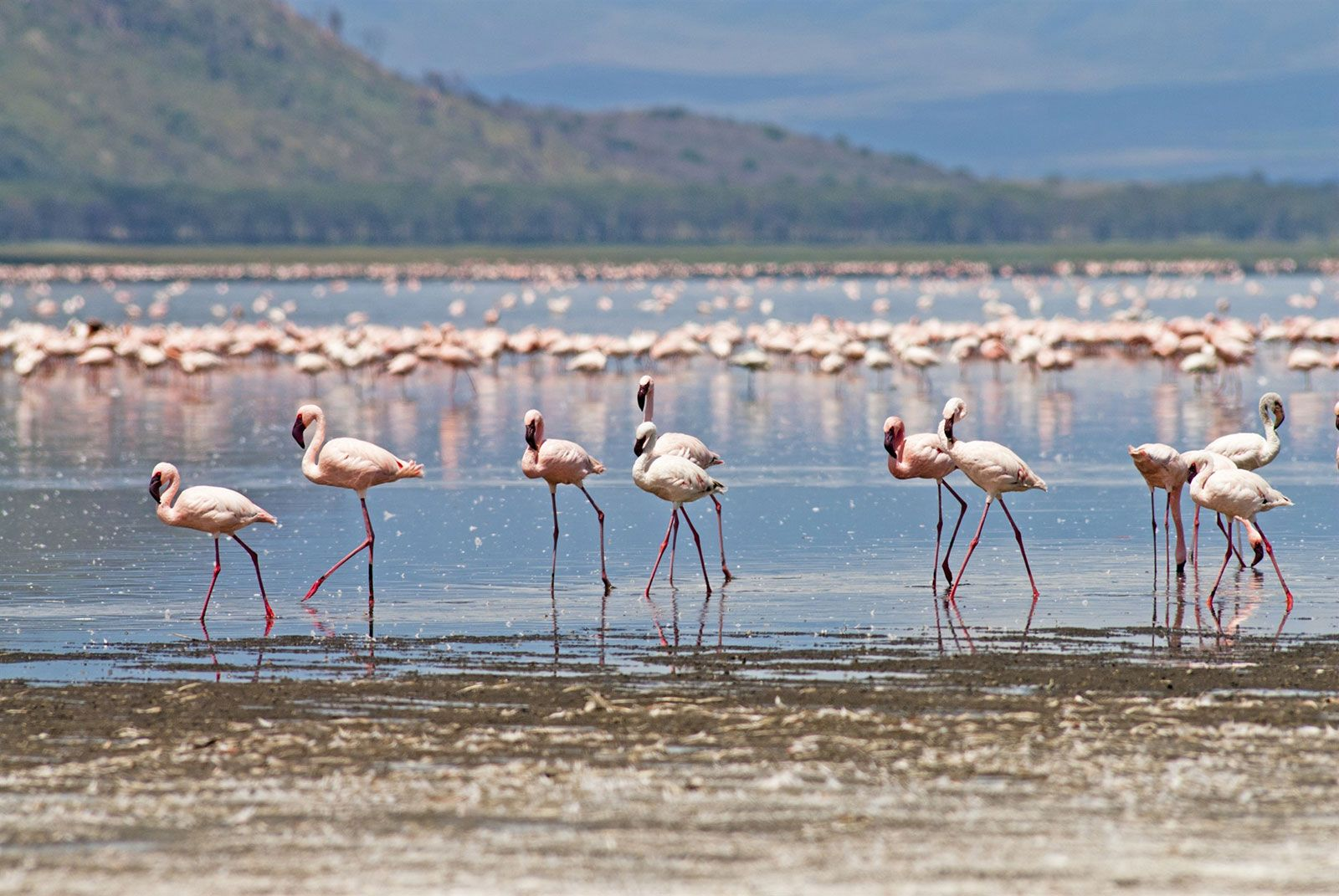 Flamingos and the Masai Mara