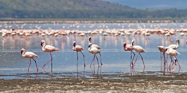 Flamingos and the Masai Mara