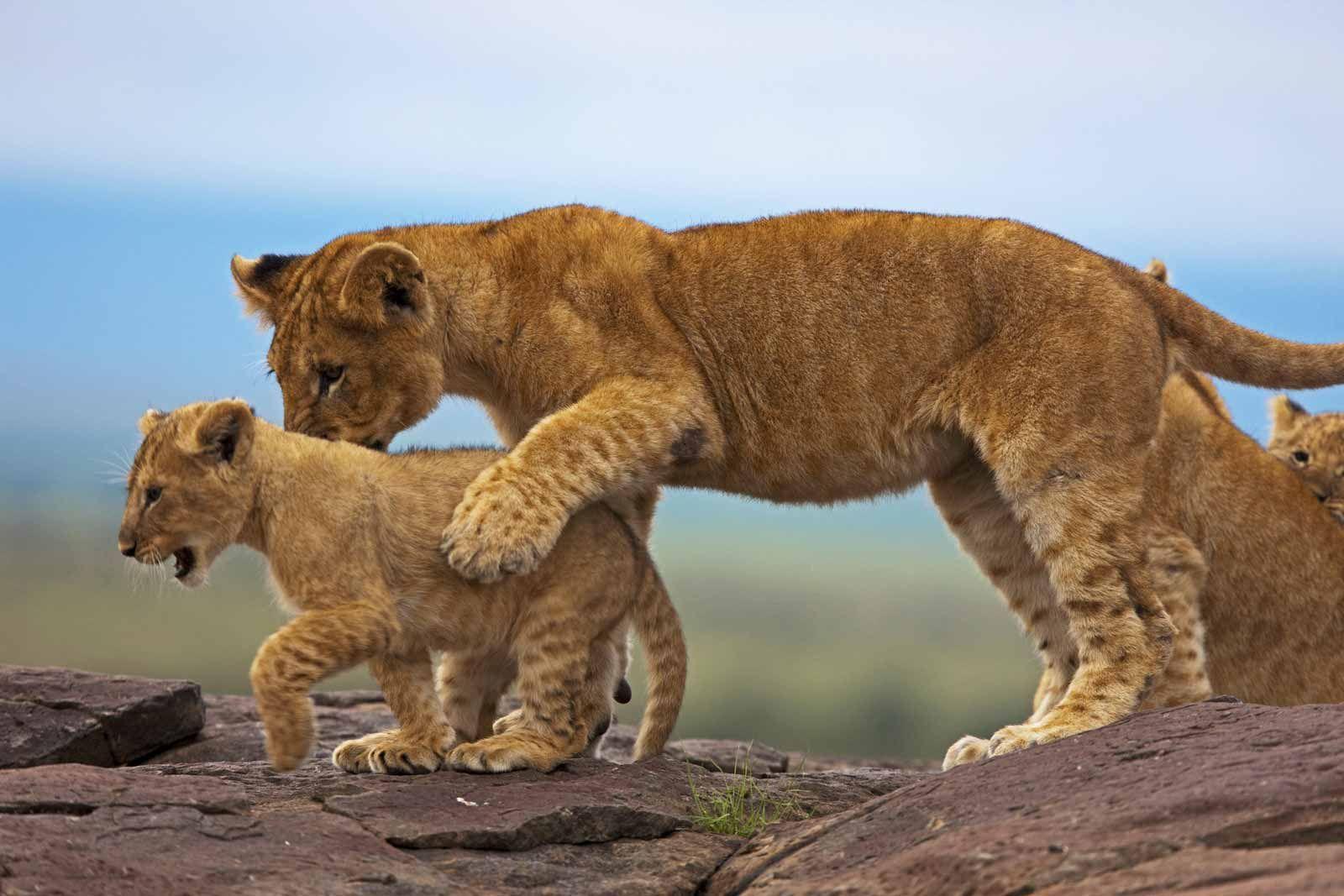 Kenya Safaris & Tours