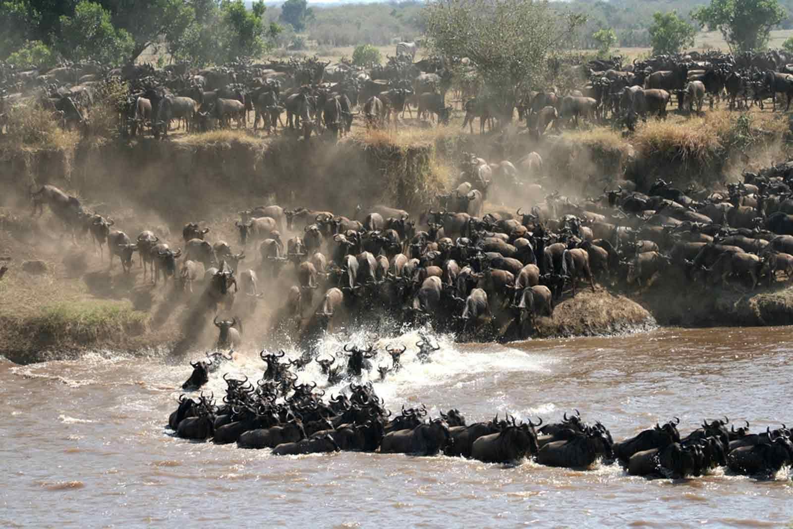 Nomad Northern Tanzania Big 5 Safari