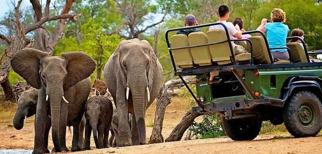 Kruger Adventure Safari