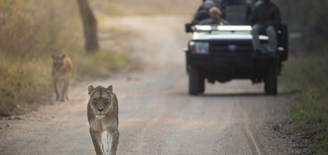 Kapama Game Reserve