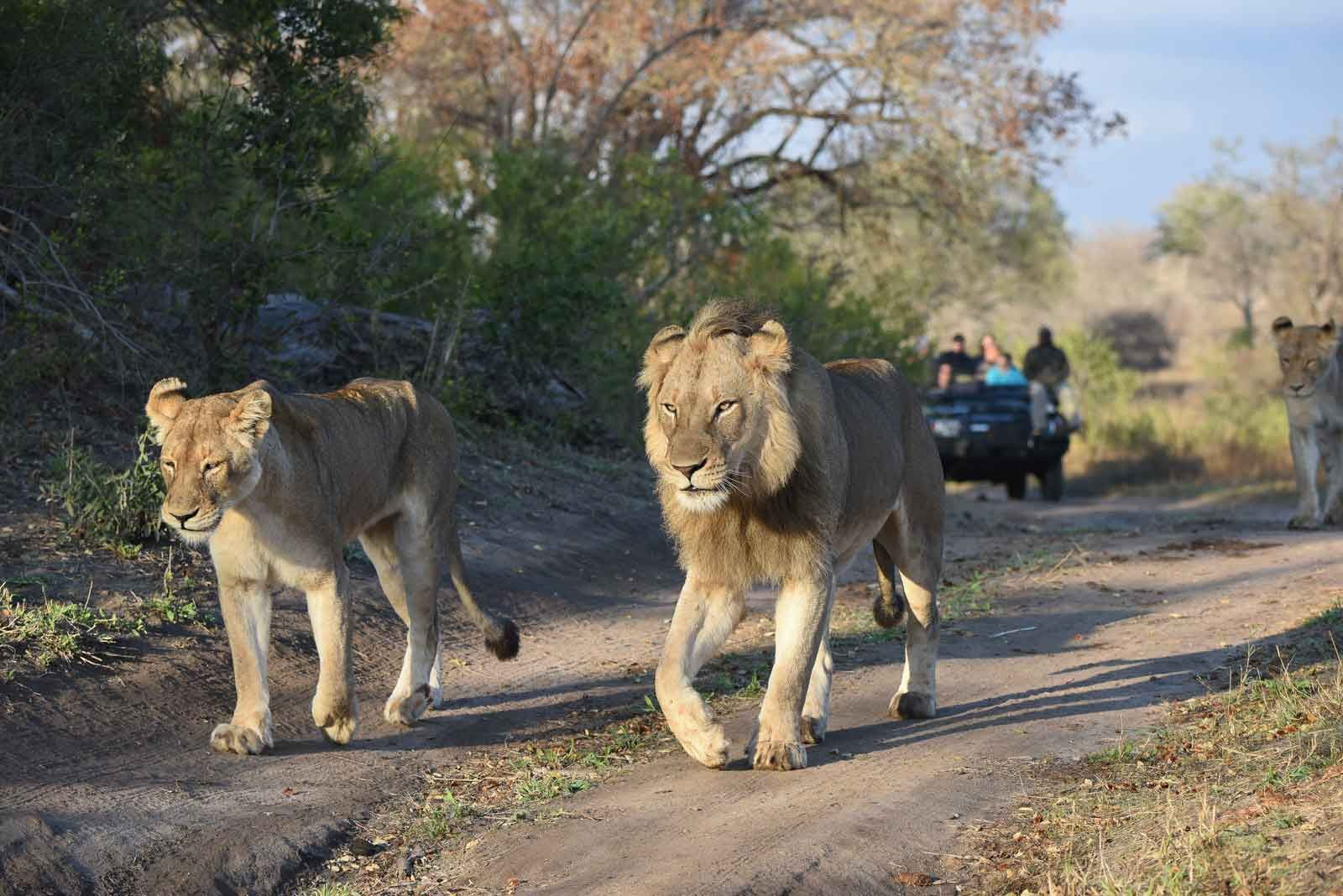 African Safaris with Sun Safaris