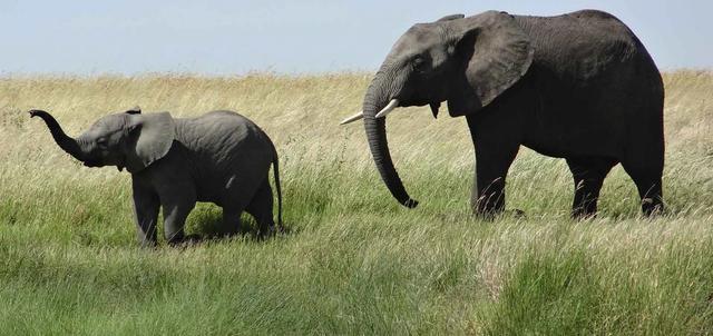 Pilanesberg National Park