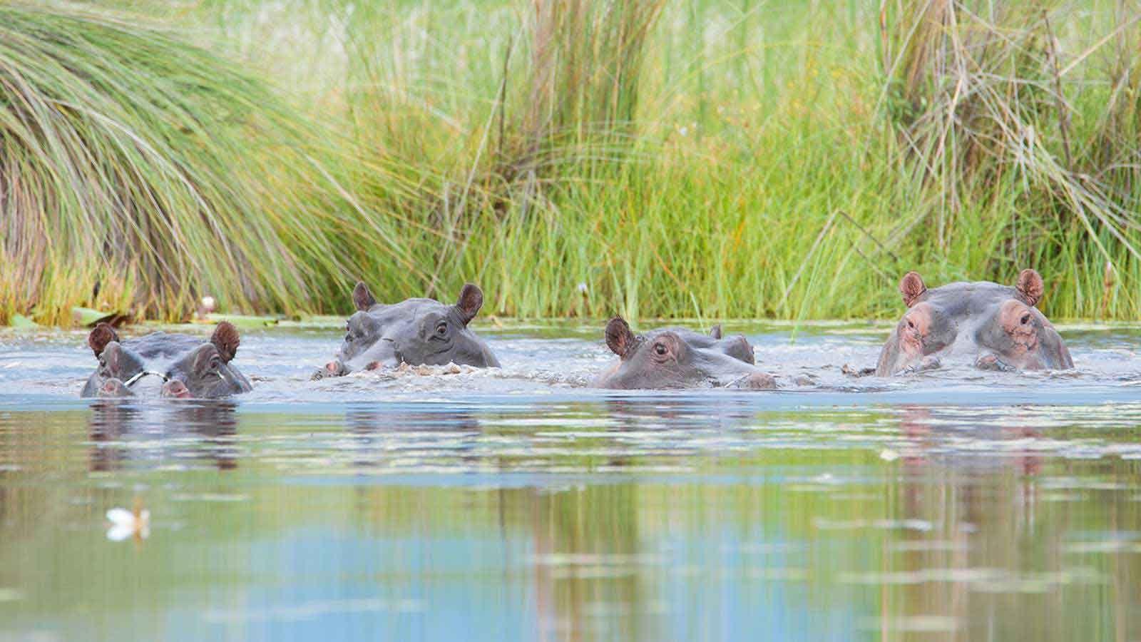 Comfortable Safari to Botswana
