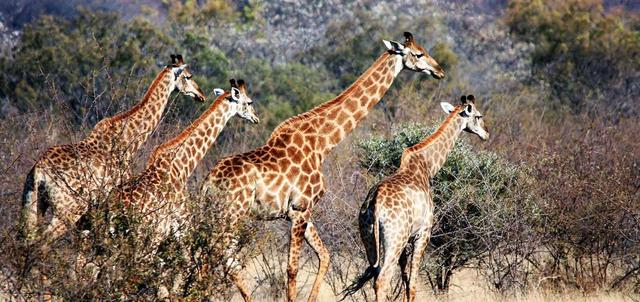 Kaingo Private Game Reserve and Spa