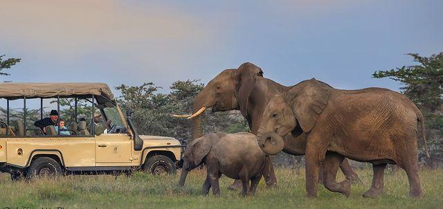 Amboseli and Ol Pejeta in Style