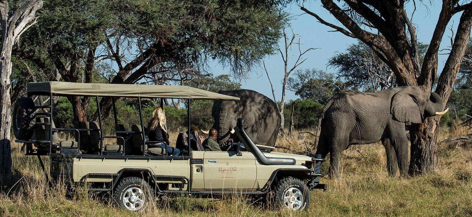 Discover the Okavango on Safari