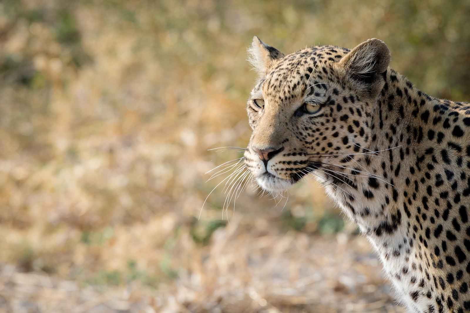 Affordable Botswana Safari
