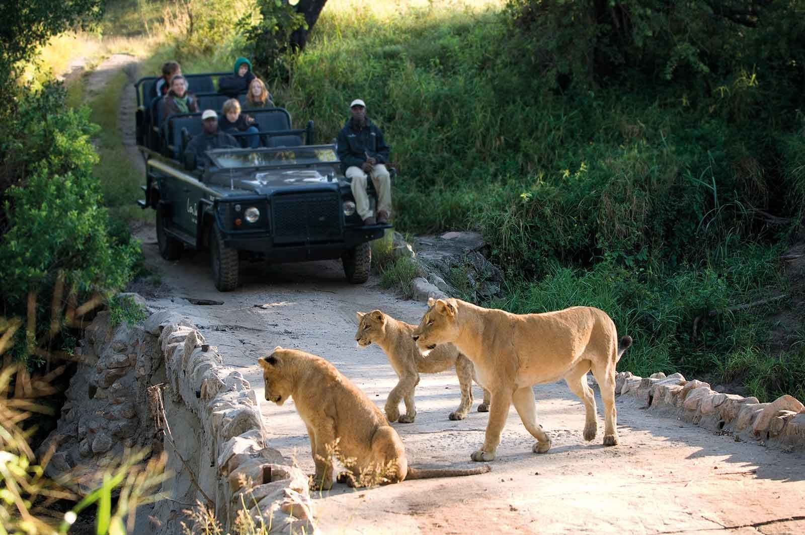 Best of the Kruger Luxury Safari