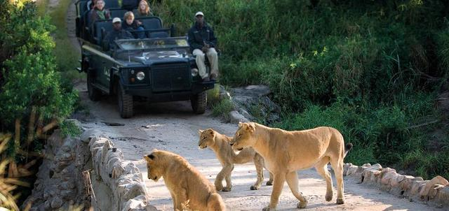 Best of the Kruger Luxury