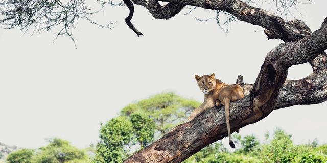 Classic Tanzania Honeymoon