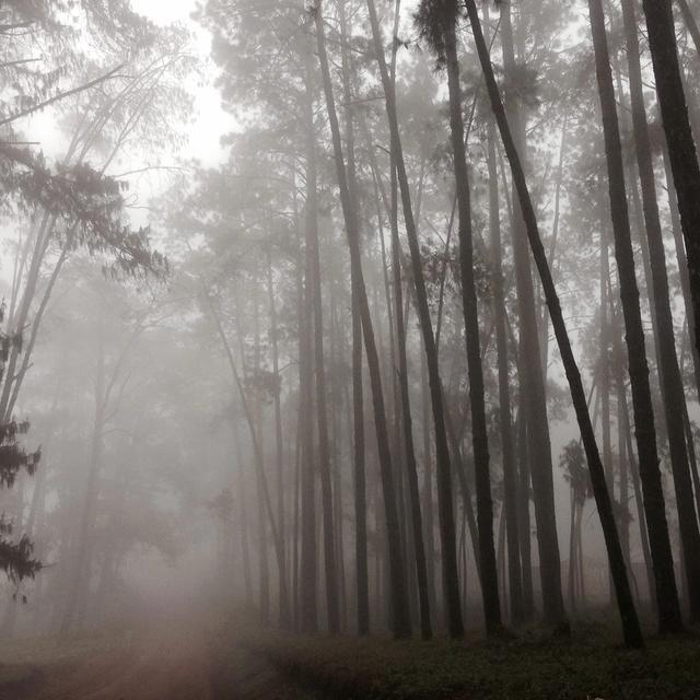 Shire Highlands