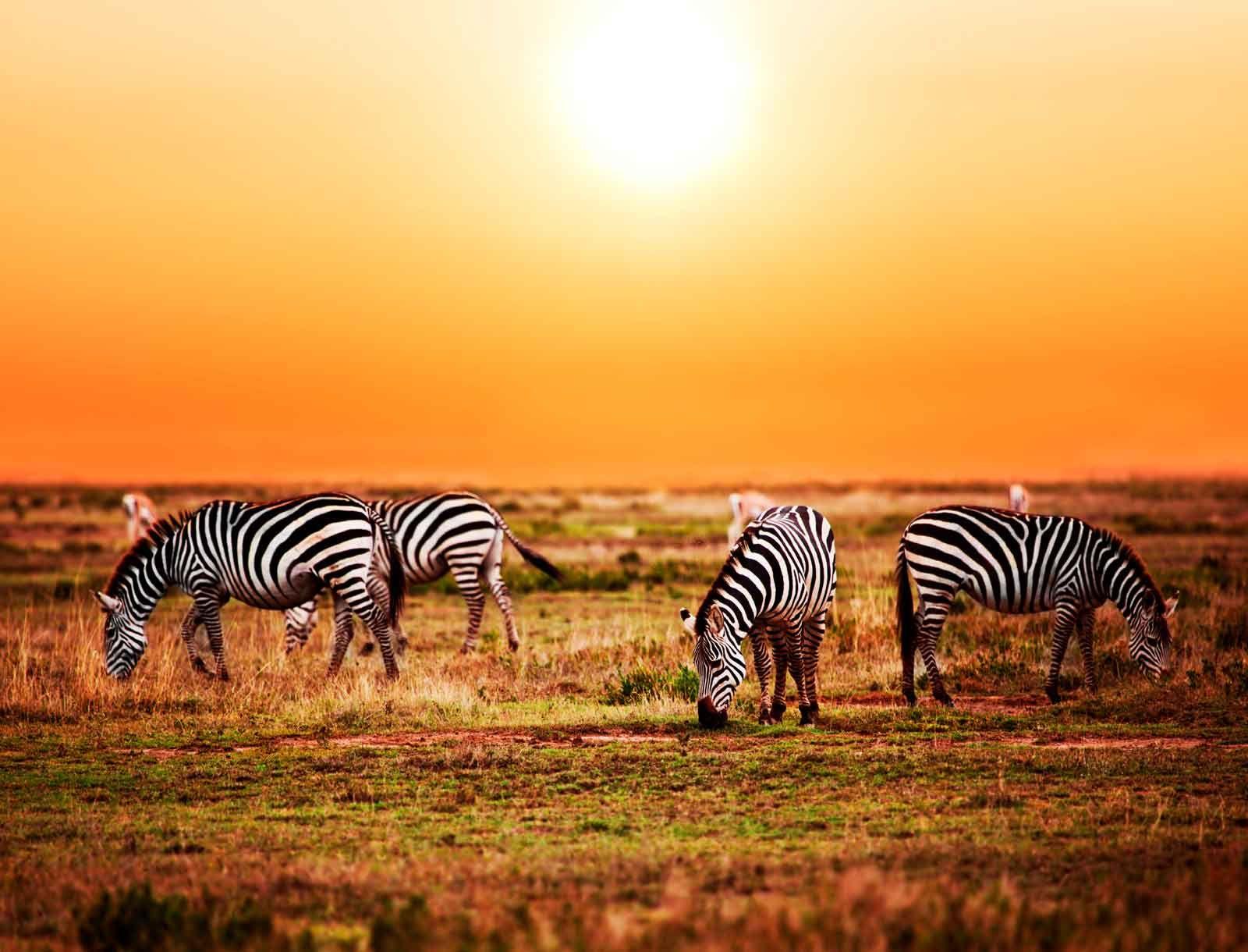African Wildlife Safaris with Sun Safaris