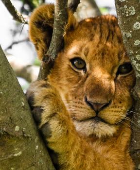 Kenya - African Safari Planning Guides