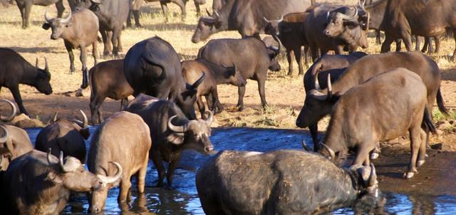Patterson's Safari Camp