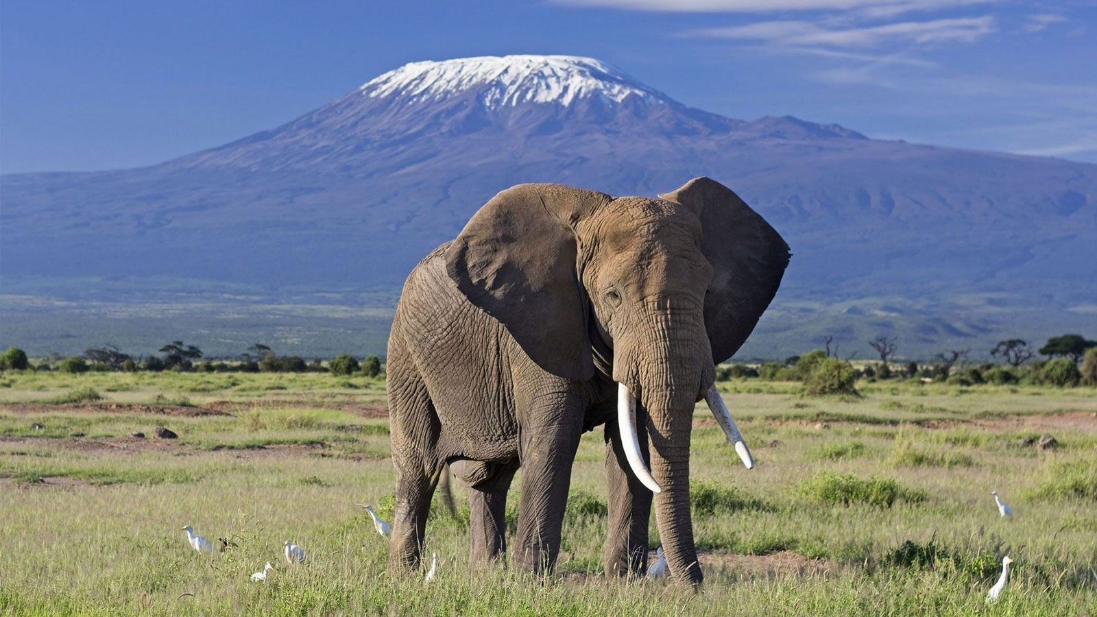 Amboseli Introduction