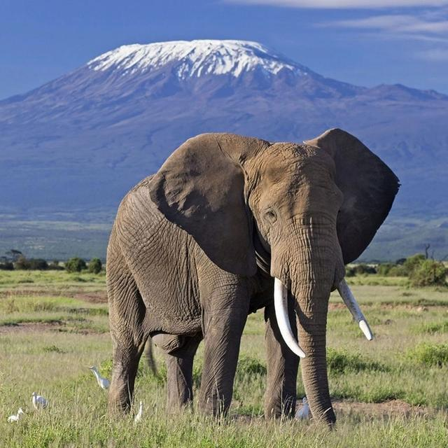 Amboseli Introduction