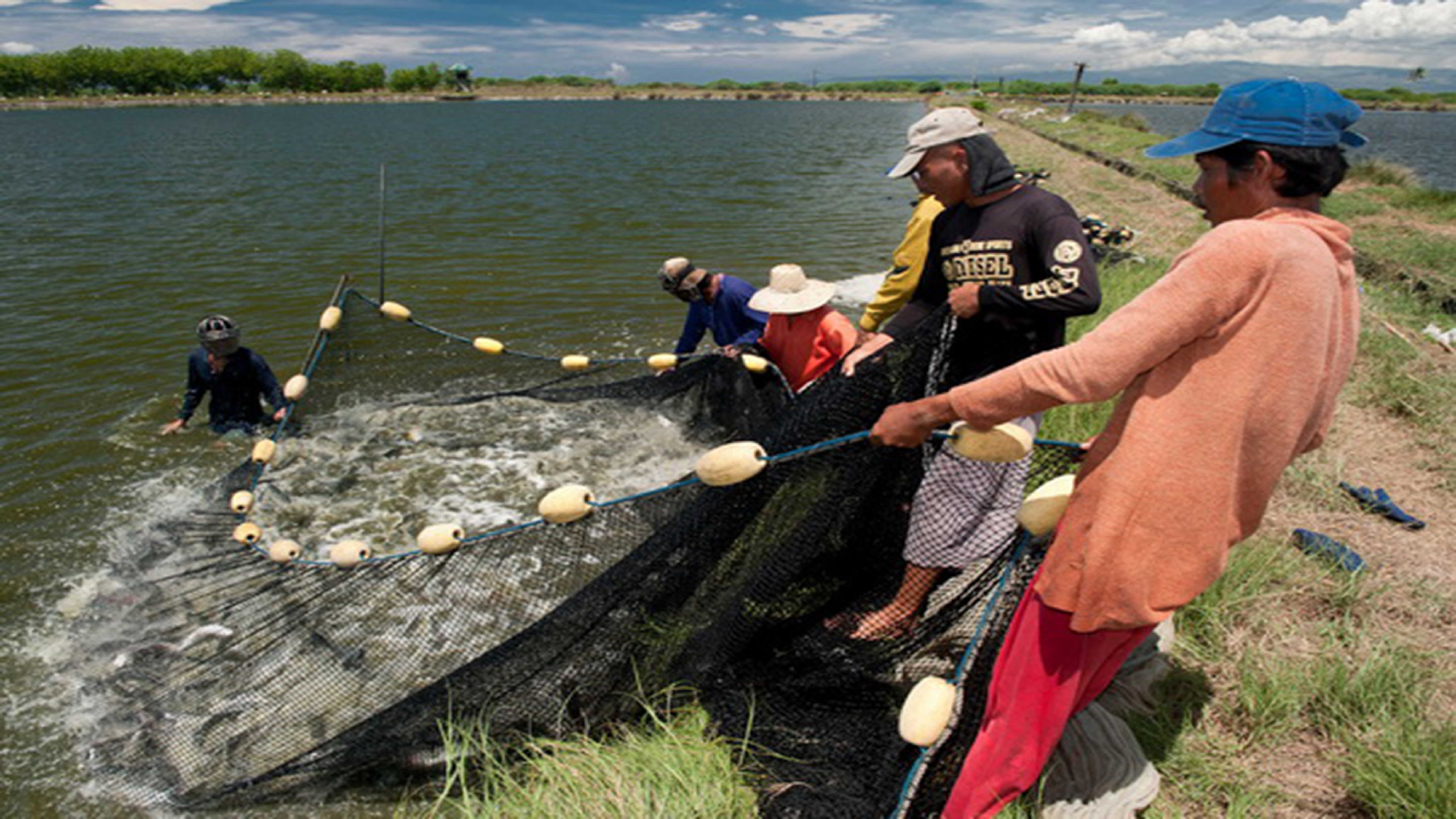 BFAR charts roadmap of country's fish industry photo from WWF