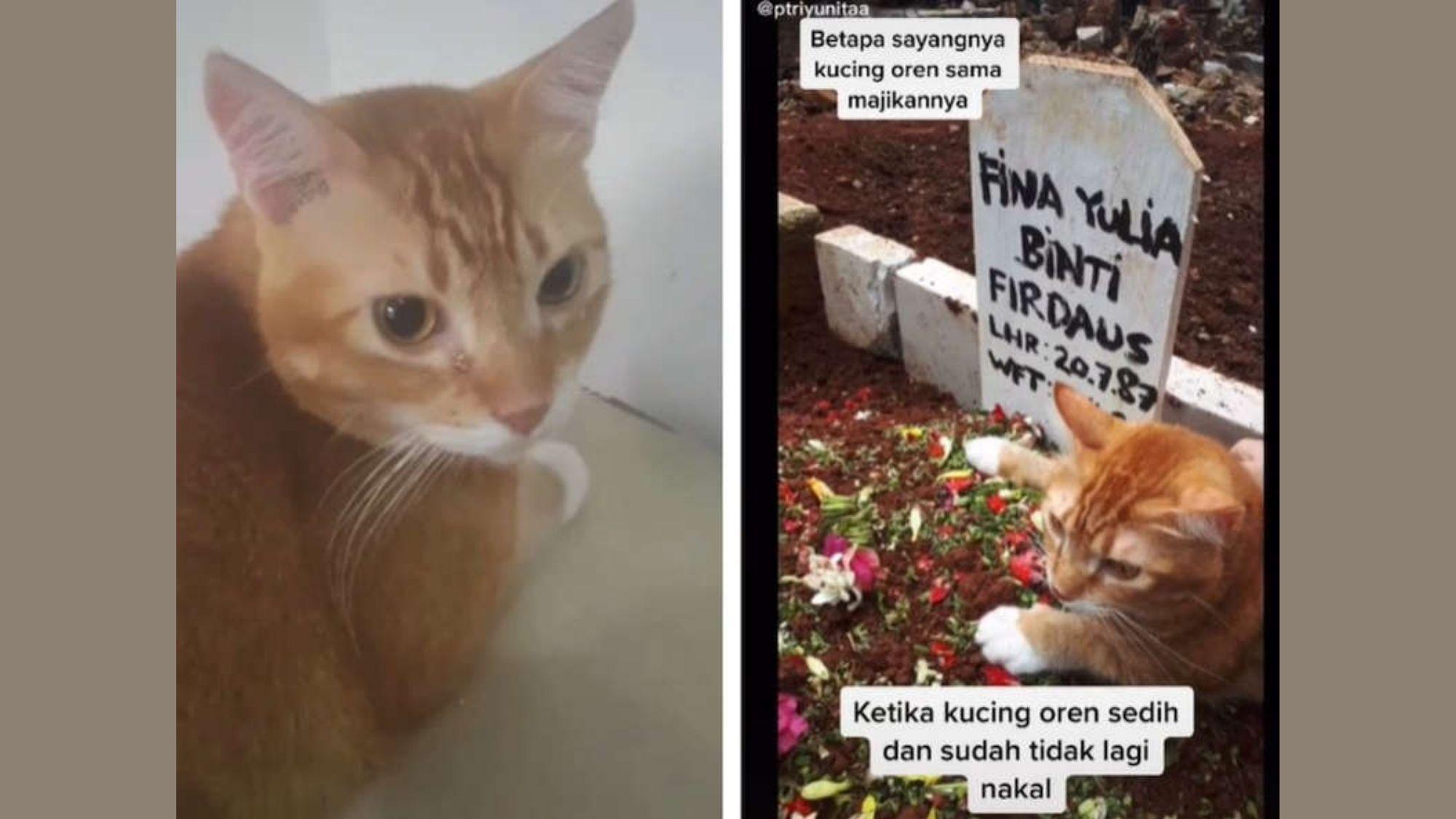 Animals feel sad too, mourning feline goes viral!
