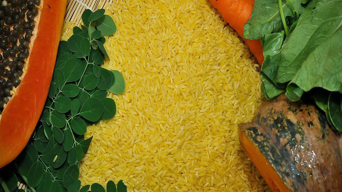 Here comes GMOs! Biosafety pioneer lauds golden rice approval photo from World Grain