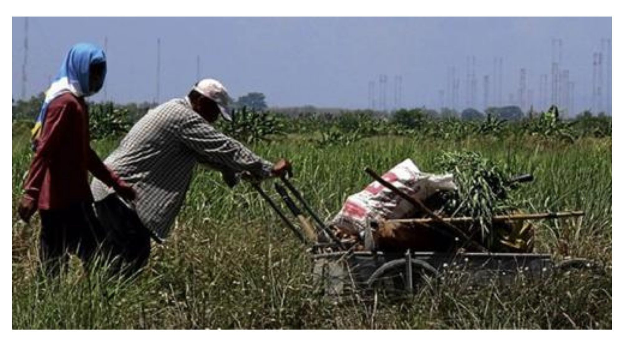 Agri workers, producers blast gov't over 'pro-importation' policies