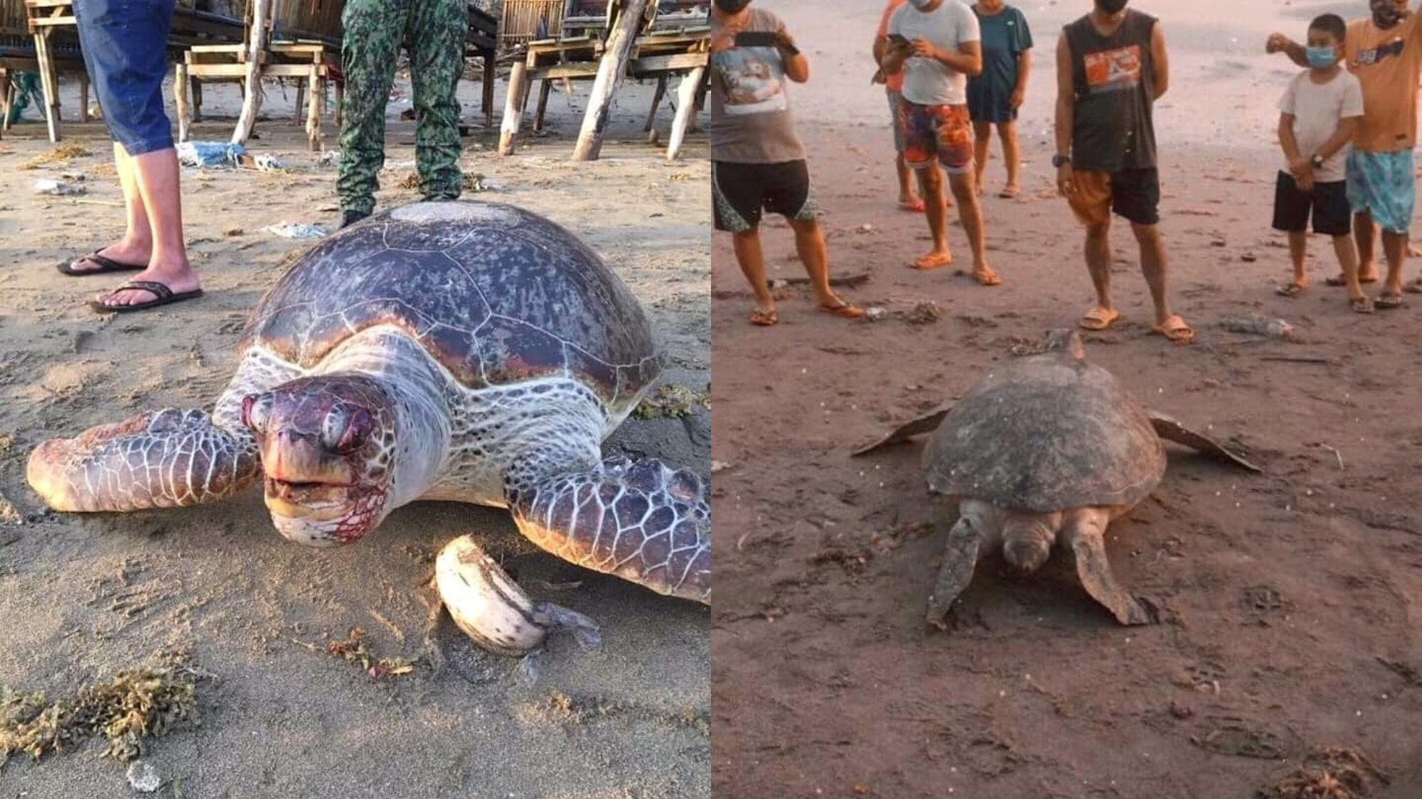 Dead sea turtle washed ashore in Calbayog photo from Opinyon 8