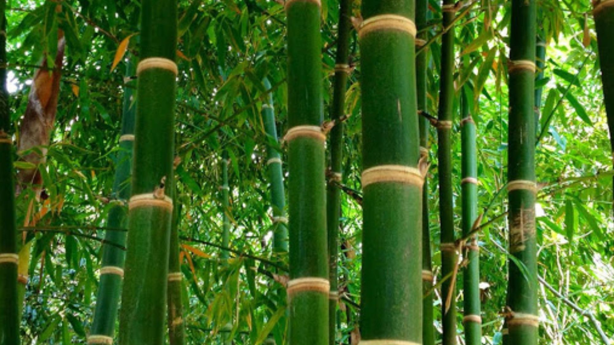 PH Bamboo Industry