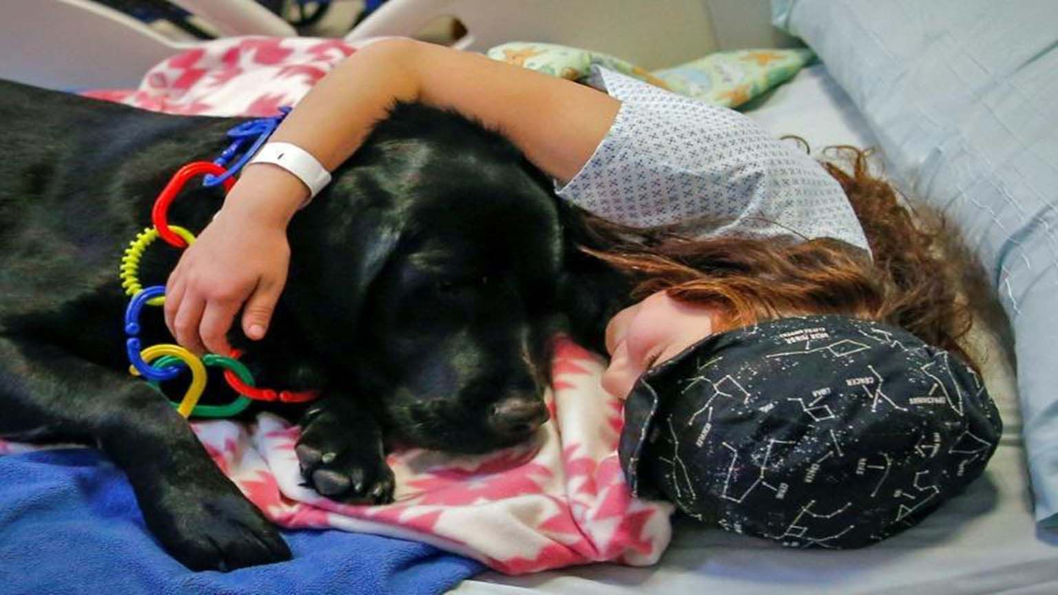 K9 dogs calm and relieve the stress of patients at a Chile hospital photo from Yahoo News
