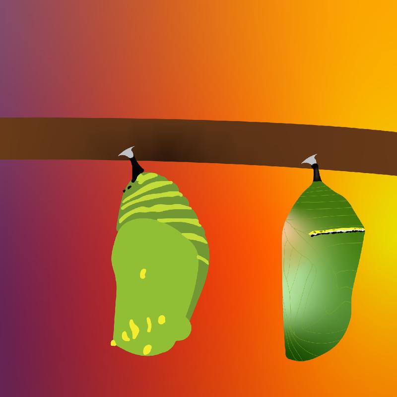 Zine: Monarch Migration
