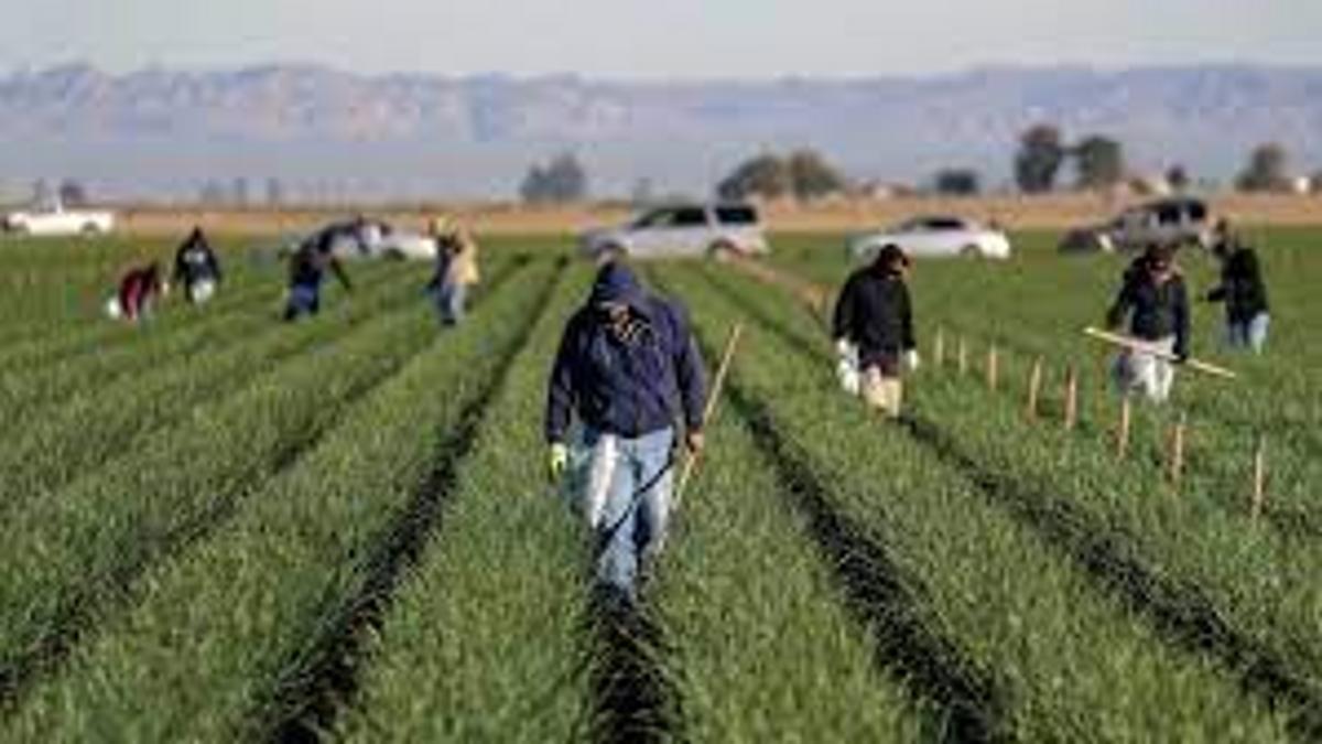 LA Agriculture Damaged by Hurricane Ida