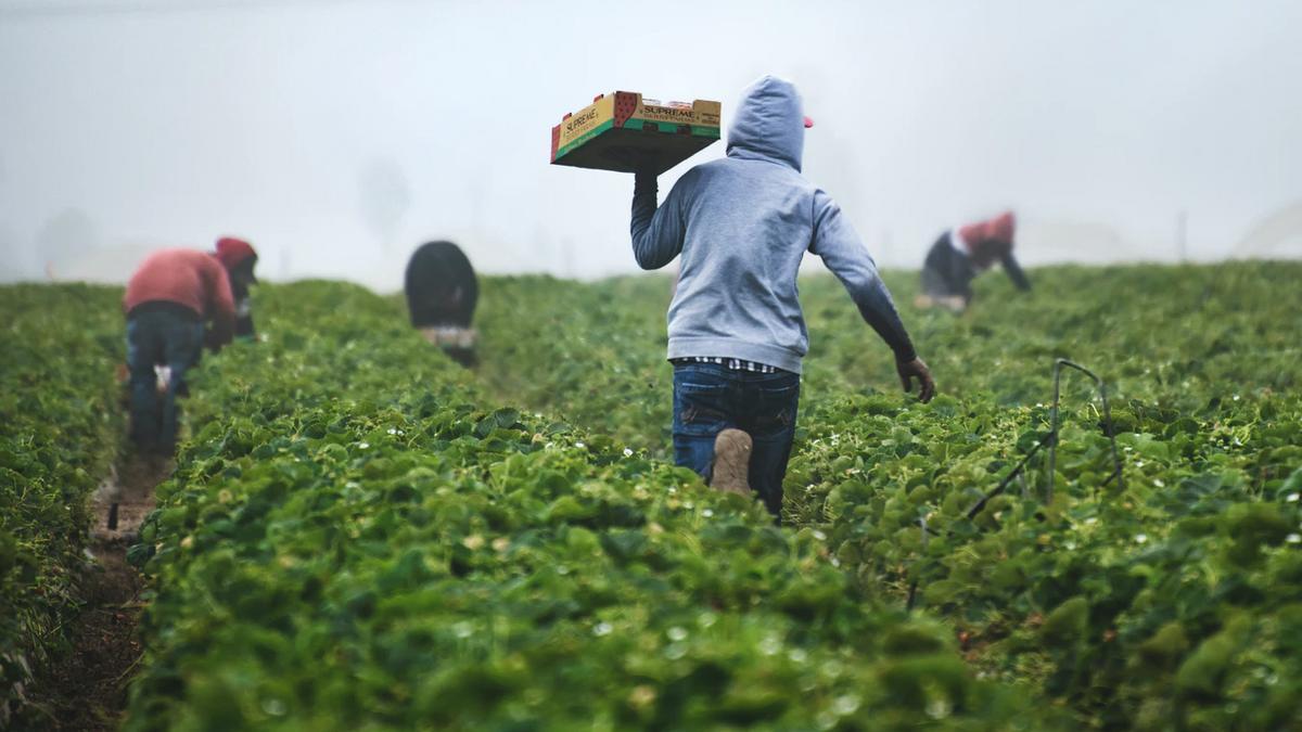Deadly Heat Threatens America's Farmerworkers