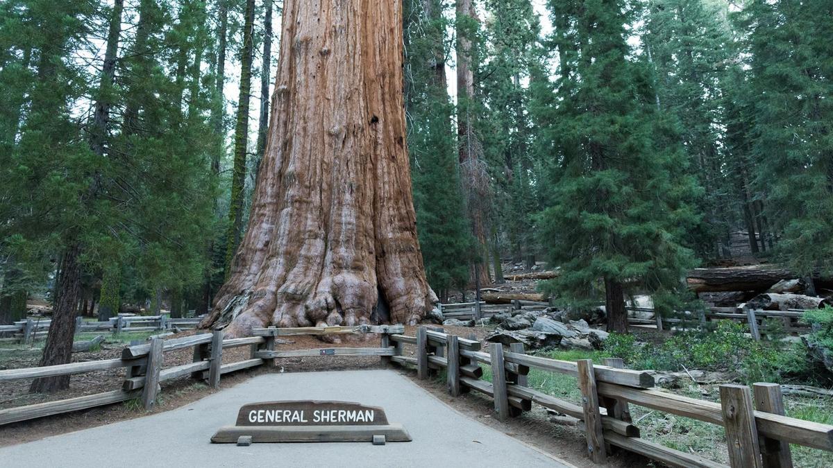 Fires threaten California's sequoias