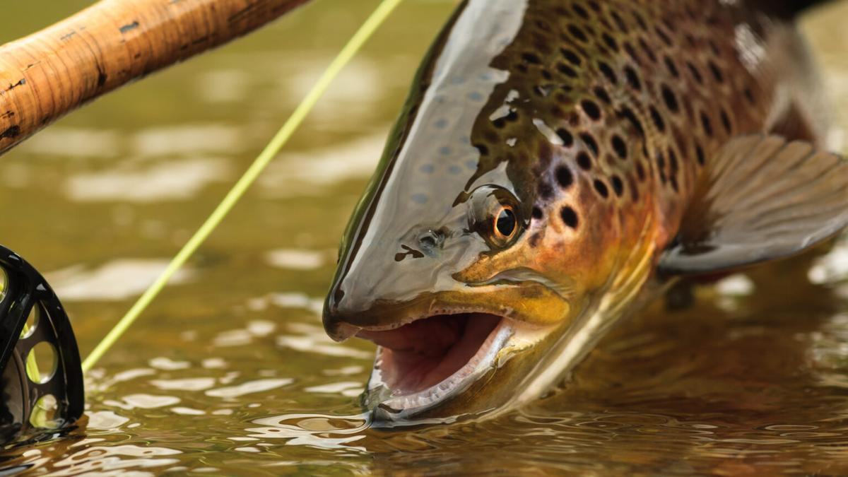 Trout fishing threatened by drought
