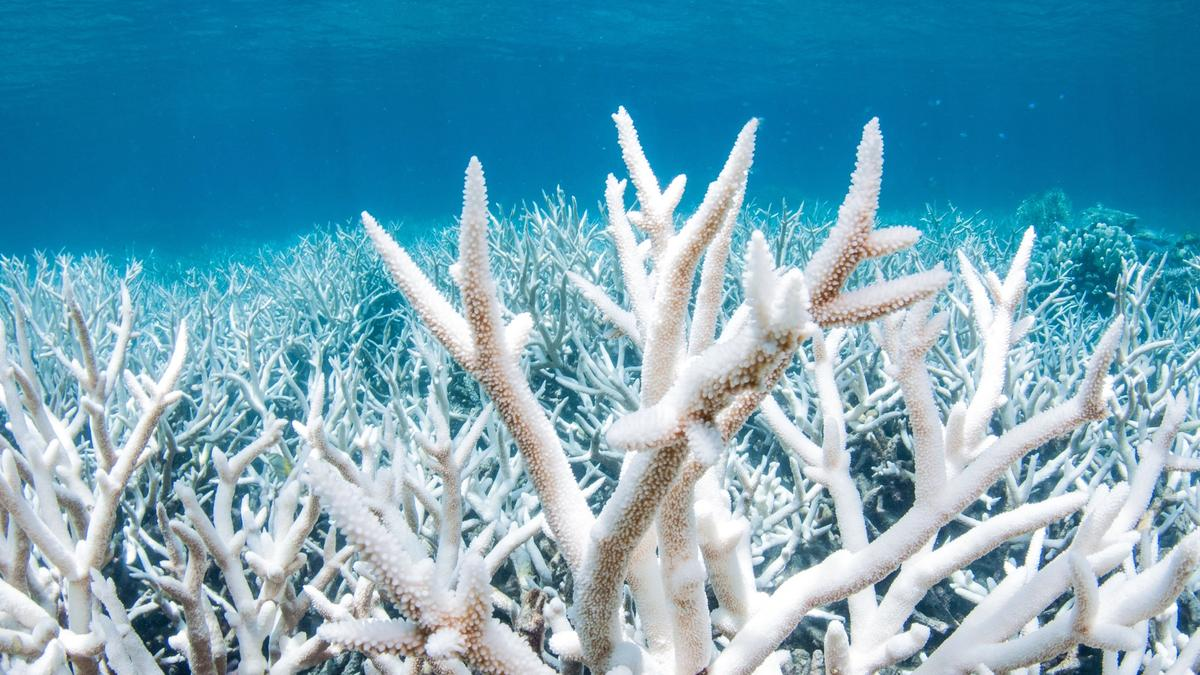 Climate Change Kills 14% of Earth's Coral Over Last Decade